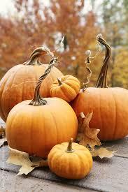 Papas Pumpkin Patch Nd by October