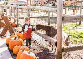 Pumpkin Patch Caledonia Mi by Fall Festival Fun At Lewis Farms And Petting Zoo West Michigan