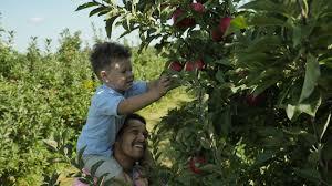 Caledonia Pumpkin Patch by Local U0027s Guide To U Pick Apple Farms U0026 Orchards In Grand Rapids