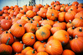 Pumpkin Patch Avon Ct by Guide To Pumpkin Picking In Connecticut I Love Halloween