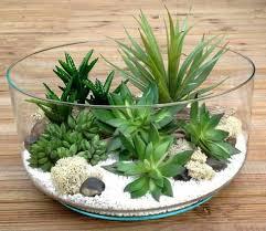 entretien plante grasse d interieur les 25 meilleures idées de la catégorie succulentes intérieur sur