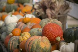 Bengtson Pumpkin Farm Chicago by For Pumpkins Orange Is Anything But The New Black Chicago Tribune