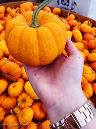 Hunter Farms Pumpkin Patch Olympia Wa by 25 Trending Spooner Farms Ideas On Pinterest Harvest Festival