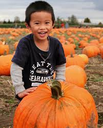 Pumpkin Patch Issaquah by Photo Gallery Pumpkin Patch Carpinito Brothers