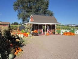 Colorado Springs Pumpkin Patch 2017 by Corn Maze Pumpkin Picking Heirloom Pumpkins Hayrides Grain Pit