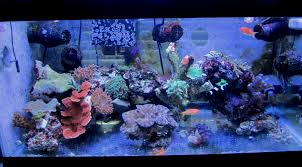 Aquascaping/Moving Live Rock - The Reef Tank Home Design Aquascaping Aquarium Designs Aquascape Simple And Effective Guide On Reef Aquascaping News Reef Builders Pin By Dwells Saltwater Tank Pinterest Aquariums Quick Update New Aquascape Of The 120 Youtube Large Custom Living Coral Nyc Live Rock Set Up Idea Fish For How To A Aquarium New 30g Cube General Discussion Nanoreefcom Rockscape Drill Cement Your Gmacreef Minimalist 2reef Forum