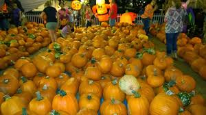 Pumpkin Patch Miami Lakes by Show Me The Minions Tour October 2014 Universal U0026 Food Complete