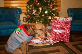 Are Christmas Trees Poisonous To Dogs Uk by From Cats Who Want To Wreck The Halls To A Very Grumpy Santa Paws