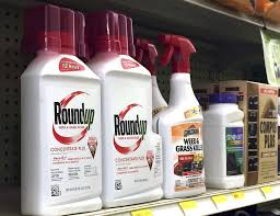 Containers Of Roundup Left A Weed Killer Is Seen On Shelf With Other