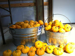 Pumpkin Patches Near Chico California by Home