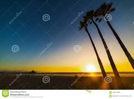 Palm Trees By The Sea In Newport Beach At Sunset Stock Photo