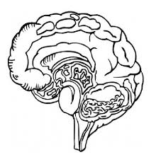 Perfect Brain Anatomy Coloring Pages U Books With Free Printable
