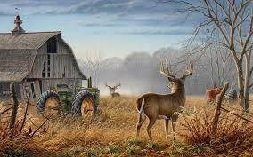 Whitetail Deer Wallpapers HQ RES Of D Screens