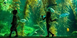 aquarium geant a visiter belgique 12 zoos et aquariums à ne pas manquer visit california