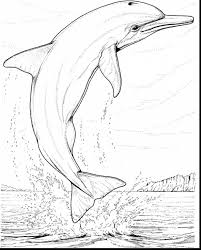 Astonishing Dolphin Coloring Pages With And To Print
