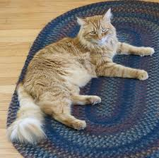 renal failure in cats taking care of a cat with kidney failure pethelpful