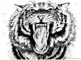 Tiger Coloring Book Pages 20 And Vamos 9179