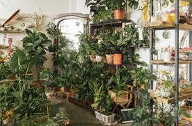 zimmerpflanzen sieben tipps damit sie gesund und schön