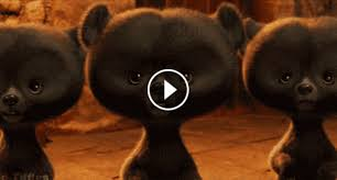 Animated GIFs About Baby Bears FOUND