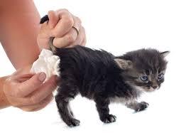 Pumpkin For Pets Diarrhea by Dealing With Kitten Diarrhea Petcha