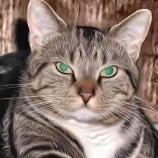 kitty cat kitty cat junction catjunction