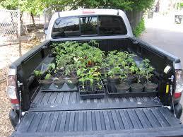 100 Seedling Truck Ginkgo Organic Gardens Cross Town Seedlings