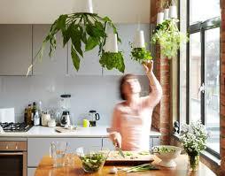 mein schöner kräutergarten in der küche freshouse