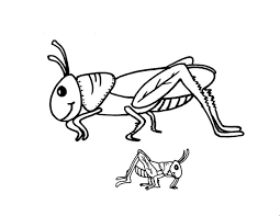 This Section Includes Enjoyable Colouring Free Printable Homework Grasshopper Coloring Pages And Worksheets For Every Age