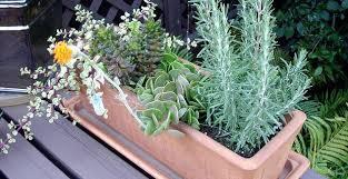 entretien plante grasse d interieur plantes grasses intérieur rendez vous sur maison jardin by excite fr