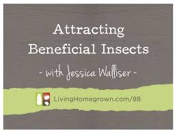 Attracting Insects To Your Garden by Living Homegrown