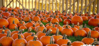 Pumpkin Patch Pasadena Area by Family Fun Zone With Santa Anita Pumpkin Patch Santa Anita Park