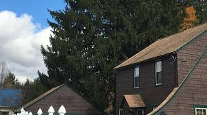 Xmas Tree Farms Albany Ny by Ny Backyard U0027s Norway Spruce To Be 2016 Rockefeller Center