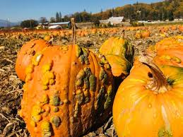 Pumpkin Patch Medford Oregon 2015 by Fort Vannoy Farms Home Facebook