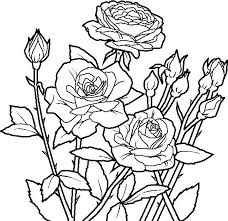 Abstract Flower Coloring Pages For Adults Rose Unique Page Flowers Printable Cool