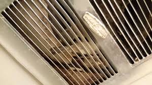 Fasco Bathroom Exhaust Fan by Bird Flies Into Bathroom Through Exhaust Fan Vent Youtube