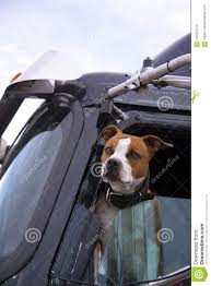 The Dog In The Cab Of The Truck Is Real Companion And Bodyguard ... A Food Truck For Pets Is Coming To Boston Magazine Dogs Die Falling Off Pickup Trucks Trucking With A Dog What Drivers Should Know About Furry Pickups Pickup Truck Dog Rudy Photograph By Tara Cantore Blue Wall Art Bromi Design Pick Up Pal Cool Stuff Driving Behind The Steering Wheel Of Lorry Stock Debbis Front Porch Dawgz The Dangers In Beds 1800petmeds Cares Novel Four Bites Hc Thrifty Teachers