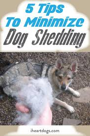 Excessive Hair Shedding In Dogs by Top 17 Idei Despre Dog Shedding Remedies Pe Pinterest