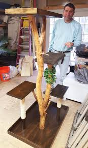 Best Type Of Christmas Tree For Cats by Make A Cat Tree Using Real Branches My Amazing Diy Cat Tree