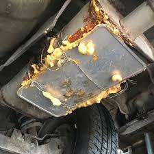 Discount Muffler & Custom Exhaust - Automotive Repair Shop - Orlando ...