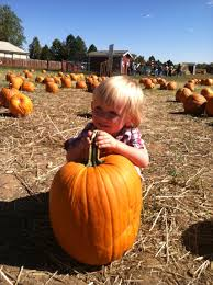 Denver Pumpkin Patch by Around Town Archives Get Involved Make Friends Enjoy Motherhood