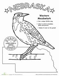 Nebraska State Bird Worksheet Education Com Massachusetts And Flower Coloring Pages