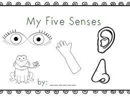 Mrs Black039s Bees My Five Senses Emergent Reader