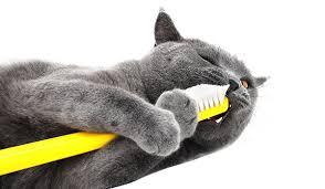 cat dental care dental care for cats walmart