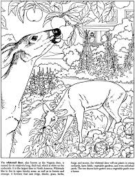 Ideal Nature Coloring Book