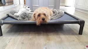 Kuranda Dog Beds by Kuranda Indoor Raised Dog Beds Easy Animal Store View