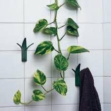 Plants In Bathroom Images by Money Plant In Bathroom Home Design Home Design