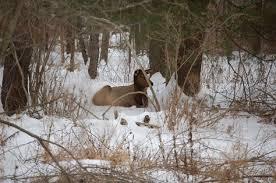 Pas Pumpkin Patch Punxsutawney by 35 Best Pennsylvania Elk Images On Pinterest Pennsylvania The