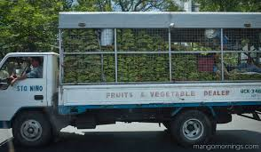 The Produce Dealer | Mango Mornings Leer Dealer Boss Van Truck Outfitters Grant Miller Motors Ltd In Vegreville Ab Serving Viking St 4 Tips For Buying A Used Truck New Used Volvo Ud And Mack Trucks Vcv Darwin Hino Of Wilkesbarre Medium Duty Truck Dealer Luzerne Pa Isuzu Adds Hrvs Sleaford To Its Expanding Network About Freightliner Western Star Sterling Nv Sparks Ate Sells Myanmar Commercial Motor Heavy Dealerscom Details Arrow Sales Semi Memphis Tn Best Resource Sprayling Midway Ford Center Kansas City Car