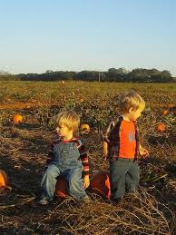 Pumpkin Patches In Oklahoma by Grider Farm Pumpkin Patch Perkins Ok