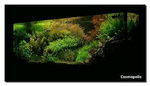 Aquascape Of The Month April 2008: